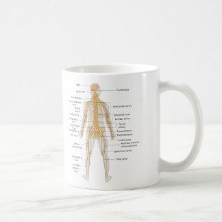 Diagrama del sistema nervioso del cuerpo humano taza de café