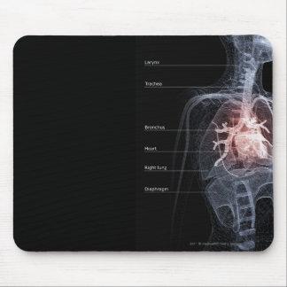 Diagrama del sistema respiratorio y del corazón alfombrilla de ratones