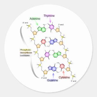 Diagrama detallado de la estructura química de la pegatina redonda