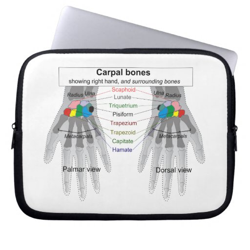 Diagrama humano de la estructura del hueso del car funda ordendadores