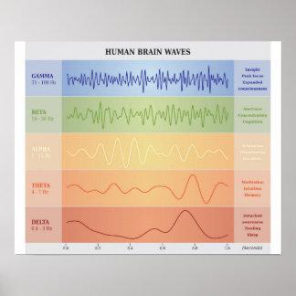 Diagrama humano de las ondas cerebrales - colores póster