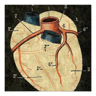 """Diagrama humano del corazón del vintage invitación 5.25"""" x 5.25"""""""