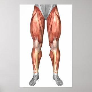 Diagrama que ilustra grupos del músculo en frente póster