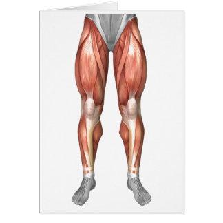 Diagrama que ilustra grupos del músculo en frente tarjetas
