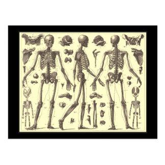 Diagramas del esqueleto del vintage tarjeta postal