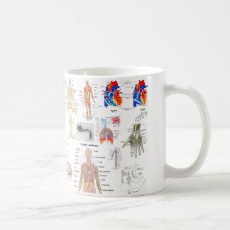 Diagramas humanos de la anatomía taza de café