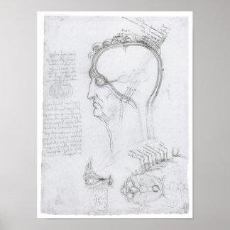 Diagrammatic Section of the Head, Leonardo Da Vinc Poster