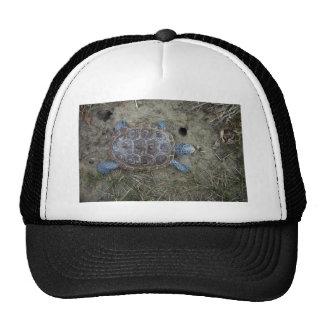 Diamondback Terrapin Hat