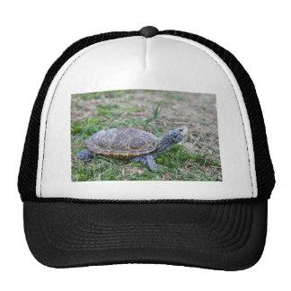 Diamondback Terrapin Mesh Hats
