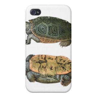 Diamondback Terrapin illustration iPhone 4/4S Covers