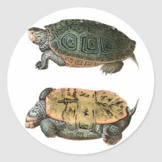 Diamondback Terrapin illustration Sticker
