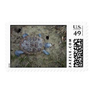 Diamondback Terrapin Postage Stamp
