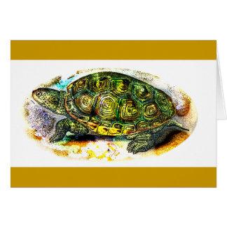 diamondback Terrapin Turtle from JungleWalk.Com Cards