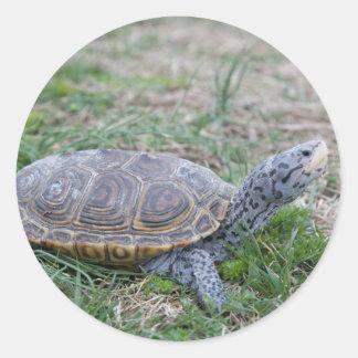diamondback terrapin turtle stickers