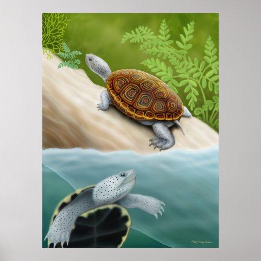 Diamondback Terrapin Turtles Poster