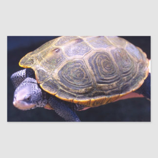 Diamondback Turtle Rectangular Sticker