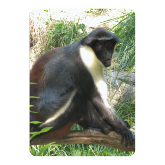 Diana Monkey With Nice Coloration 5x7 Paper Invitation Card