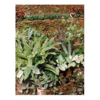 Diane's Garden - CricketDiane Art Products Post Card