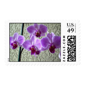 Diane's Orchids Postage