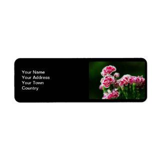Dianthus #1 label