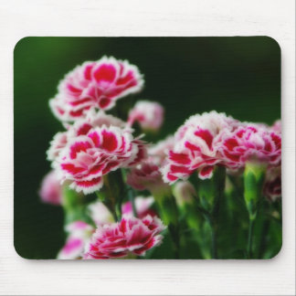 Dianthus #1 mouse pad