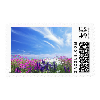 Dianthus and Salvia Flowers Postage Stamp