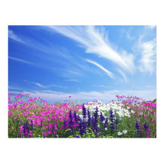 Dianthus and Salvia Flowers Postcard