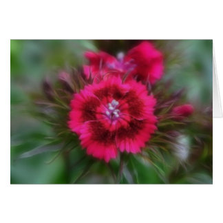Dianthus Barbatus - Deep Red Card