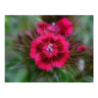 Dianthus Barbatus - Deep Red Postcard