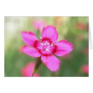 Dianthus Deltoides Flowers  - Close Up Card