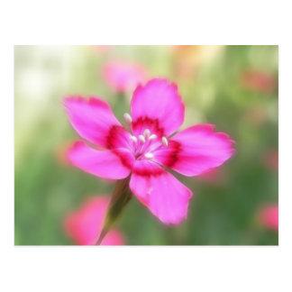 Dianthus Deltoides Flowers  - Close Up Postcard