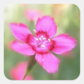Dianthus Deltoides Flowers  - Close Up Square Sticker