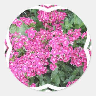 Dianthus Perennial Sticker