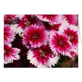 Dianthus Pinks Card