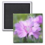 Dianthus Plumarius Flower Refrigerator Magnet