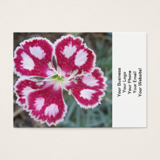 Dianthus Red White Flower Business Card