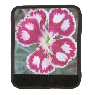 Dianthus Red White Flower