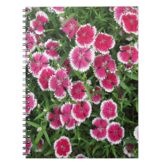 Dianthus White Pink Spiral Note Book
