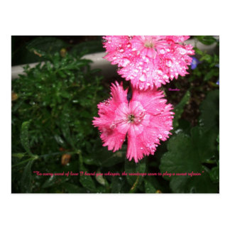 Dianthus with Raindrops Postcard
