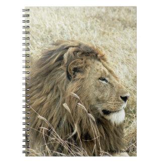 Diario masculino del león libretas