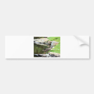 Diary of a Mad Brown Duck Bumper Sticker