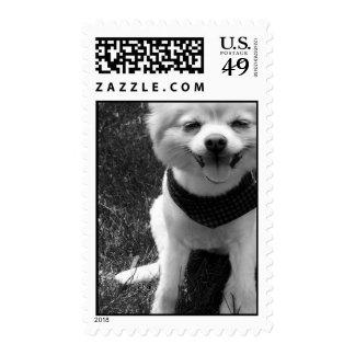 Días calientes del perrito del verano sello