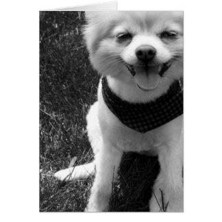 Días calientes del perrito del verano tarjeta de felicitación