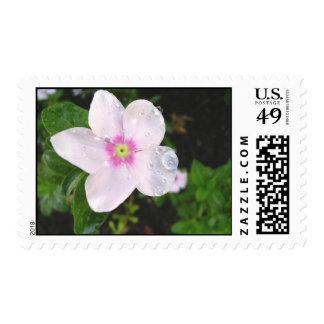 Días de Flores Stamp
