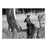 Días del canguro tarjeton
