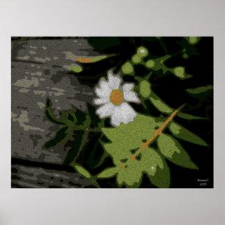 Días oscuros de la flor blanca posters