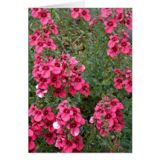 Diascia rosado oscuro tarjeta de felicitación