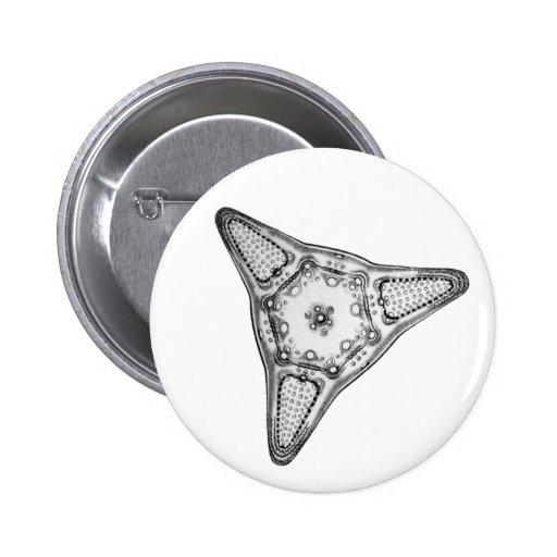 Diatom Button