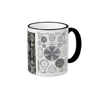 diatom, diatom, navicula coffee mugs
