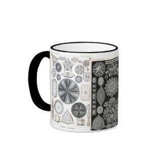 diatom, diatom, navicula ringer coffee mug